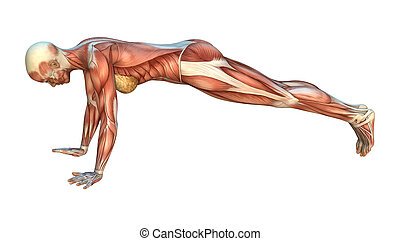 肌肉, 地圖