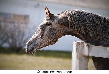 肖像画, サラブレッド, 種馬, スポーツ