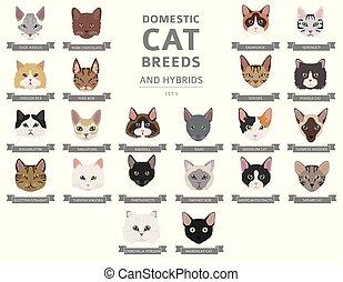 肖像画, ハイブリッド, セット, 平ら, ねこ, cat`s, 国内, 色, 隔離された, コレクション, 品種, 頭...