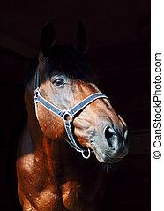 肖像画, 暗い, 馬, 美しい