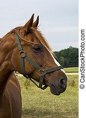 肖像画, horse.