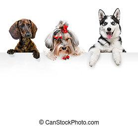 肖像, 在中, 不同, 繁殖, 狗