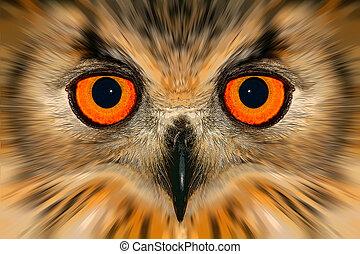肖像, 提高, 貓頭鷹