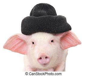 肖像, ......的, a, 豬