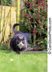 肥胖症, 花園