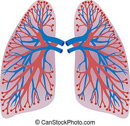 肺, の, ∥, 人
