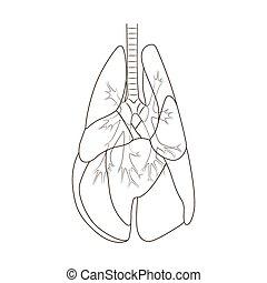肺, ......的, the, 狗, 矢量, 插圖