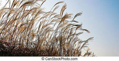 背が高い草, ∥において∥, 日没