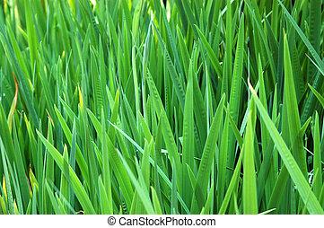 背が高い草