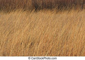 背が高い草, 草原