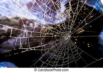 背中, 網, いくつか, くも, 照らされた