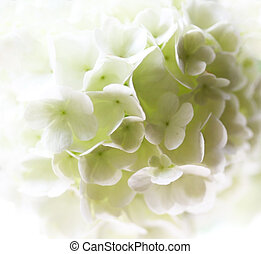 背景, ∥で∥, 白, flower.
