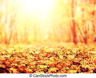背景, ぼんやりさせられた, 森林, 秋