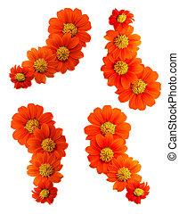 背景, コレクション, rotundifolia, 花, 白