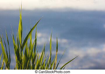 背景, スカイブルー, 緑, ぼんやりさせられた, 草