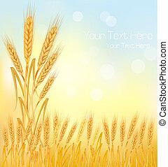 背景, 小麦, 黄色, 熟した, e