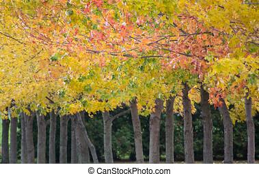 背景, 木, 秋, 横列