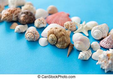 背景, 殻, 青, 海, 別