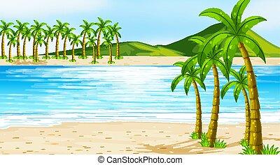 背景, 浜, 木, 現場, ココナッツ