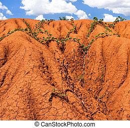 背景, 浸食, 土壌