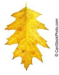 背景, 白, 葉, 隔離された, 黄色