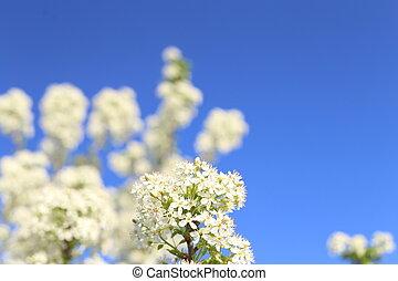 背景, 美しい, 春