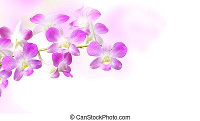 背景, 花, 蘭, ぼんやりさせられた