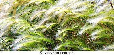 背景, 草が茂った, tassles