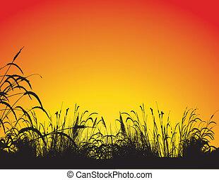背景, 草, シルエット