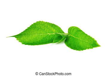 背景, 葉, 白, 緑