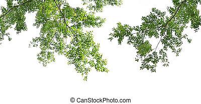 背景, 葉, 緑の白
