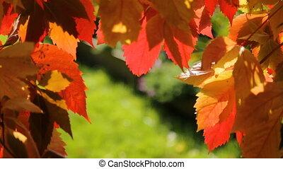 背景, 赤い緑, 黄色, 群葉, 秋