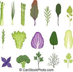 背景, 野菜, 葉が多い, 料理, 葉, 菜食主義者, ハーブ, ベクトル, 白, セット, イラスト, 緑になる, 有機体である, サラダ, 健康