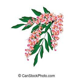 背景, 隔離された, フィステル, 花, cassia, ピンク, 白