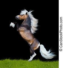 背景, 馬,  reared,  -, 白色