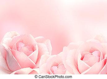 背景, 3, ピンクのバラ, ぼんやりさせられた
