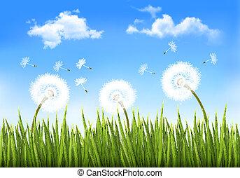 背景, dandelions., vector., 自然