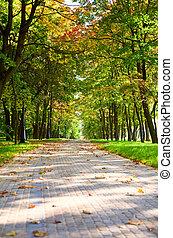 胡同, 在中, 秋天, 公园