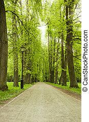 胡同, 在中, 绿色的公园