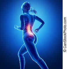 脊柱, 解剖学, 中に, ジョッギング