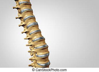 脊柱, 診断
