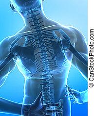 脊椎, 痛苦, 概念
