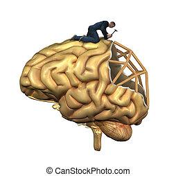 脑子, 重建