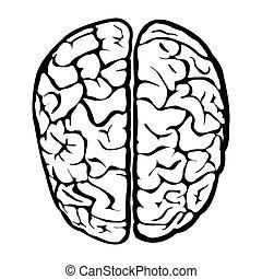 脳, すてきである, 人間, 印