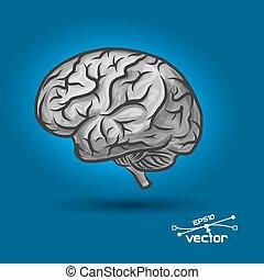 脳, の, ∥, 人