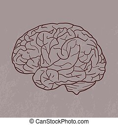 脳, イラスト, 人間
