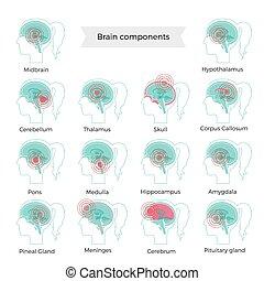 脳, イラスト, 痛み