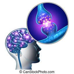 脳, シナプス, 神経