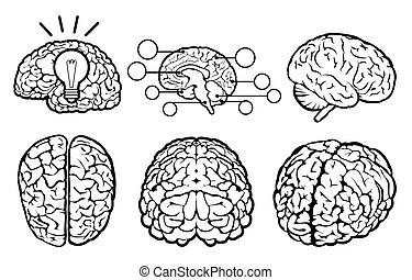 脳, セット, 人間