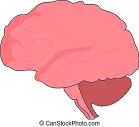 脳, バックグラウンド。, 白, イラスト, 人間, ベクトル